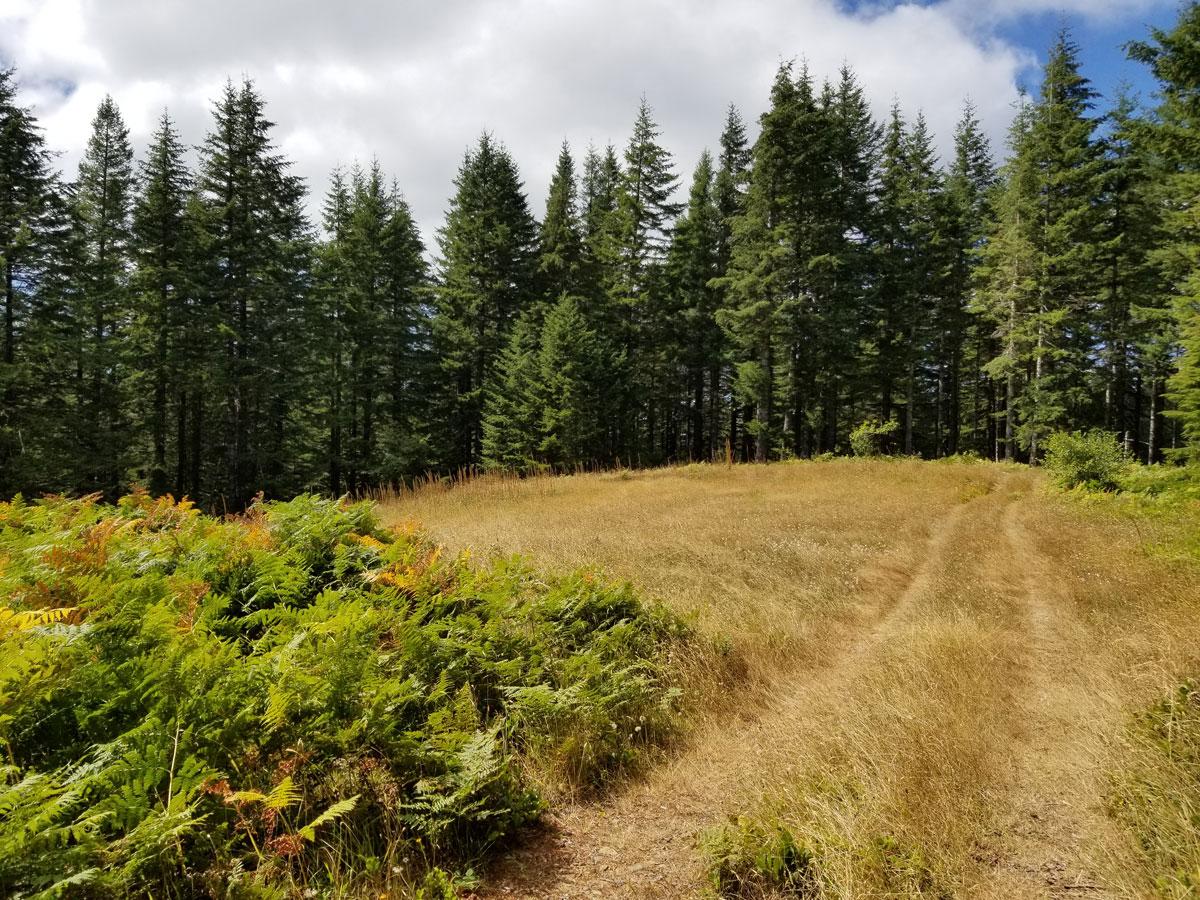 Forest Road in Rock Creek Wilderness, Oregon